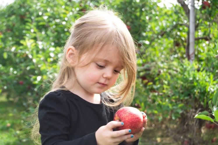 long family orchard, michigan